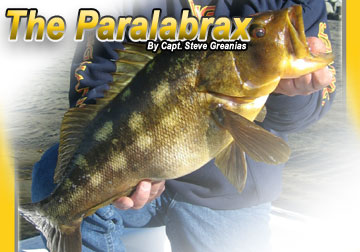 swba-paralabrax-calico-bass