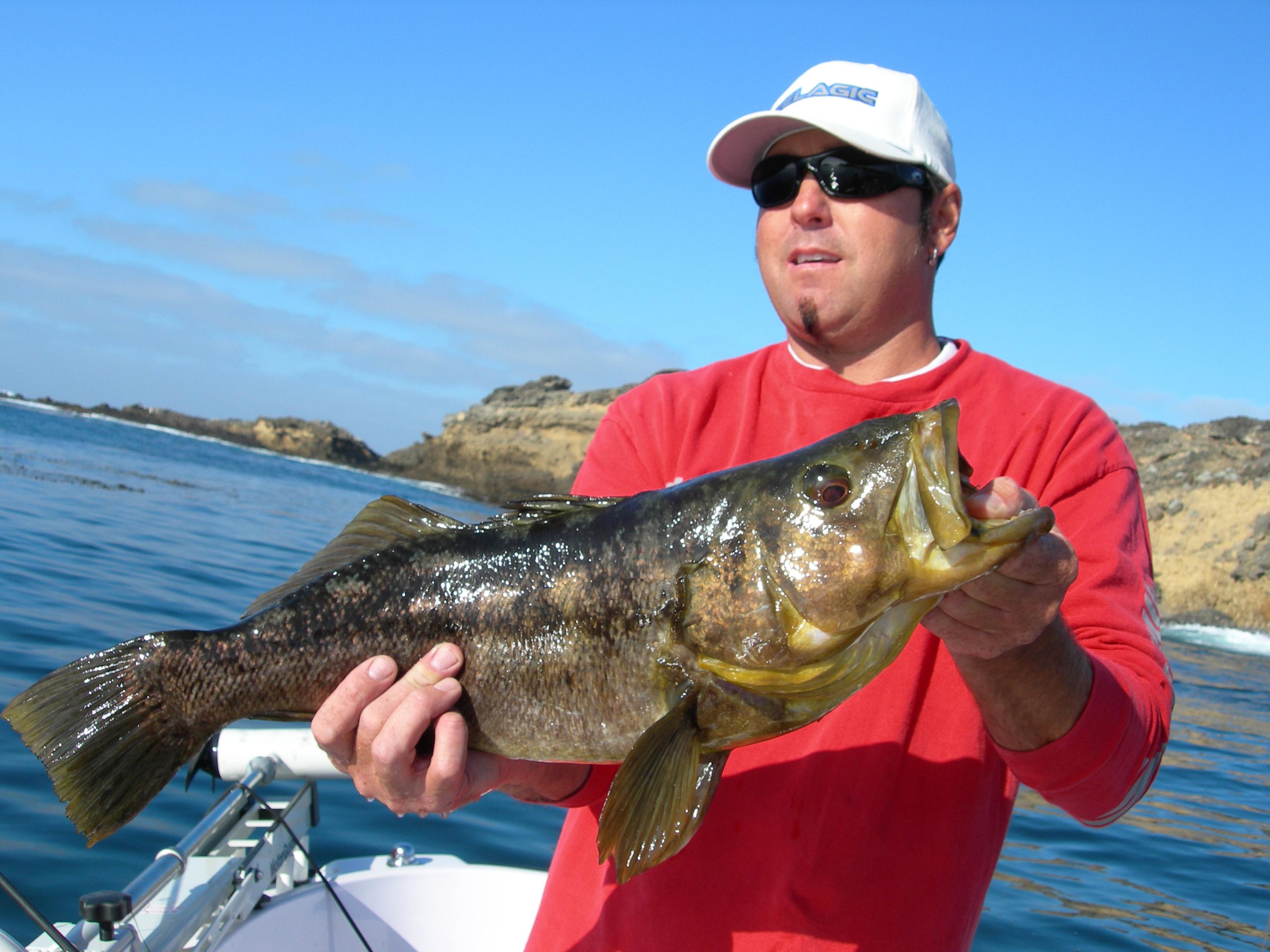 Fishing big baits will produce saltwater bass anglers swba for Calico bass fishing
